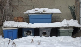 TorontoStreetCats-Shelters in Action