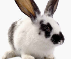 Help Us Ban Cosmetic Testing on Animals