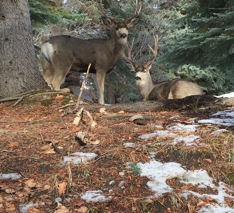 Translocation:  A good first step away from deer-killing
