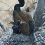 BKM_cormorant_and_young