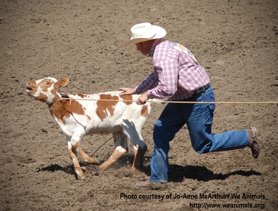 We Animals-Calf roping