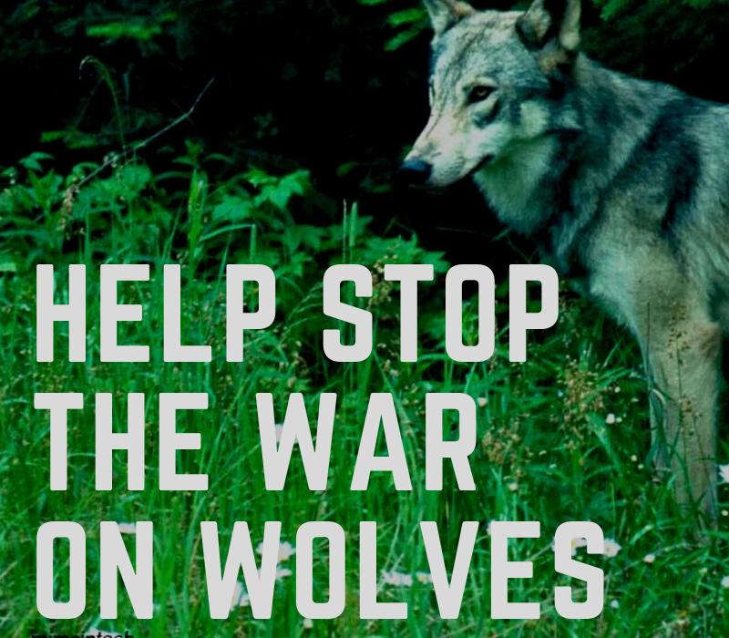 ON-war-on-wolves