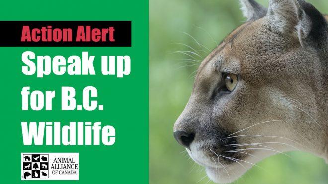 B.C. Wildlife