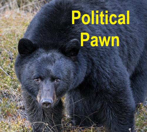 ontario-bear-pawn