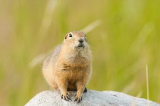 shutterstock-squirrel-resized